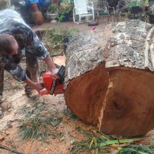 chainsawing tree trunk